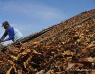 Hasil penelitian YPKP Indonesia: Nikotin tak berbahaya, kenapa?